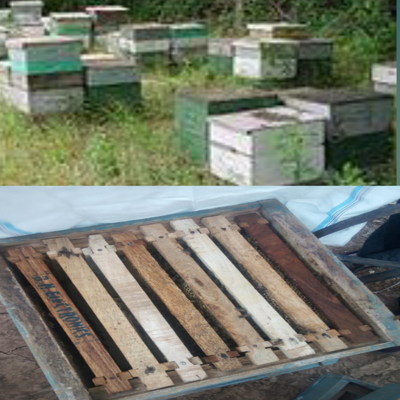 [Honey bee] Apiary setting in apiculture