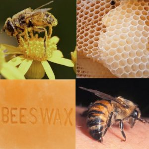 Beneficial product from honey bees:Apiculture