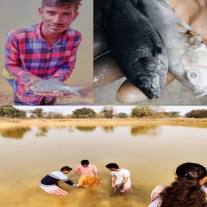 Induced breeding of fishes:Aquaculture