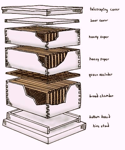 Langstroth hive & Newton's hive in Beekeeping method (Apiculture)