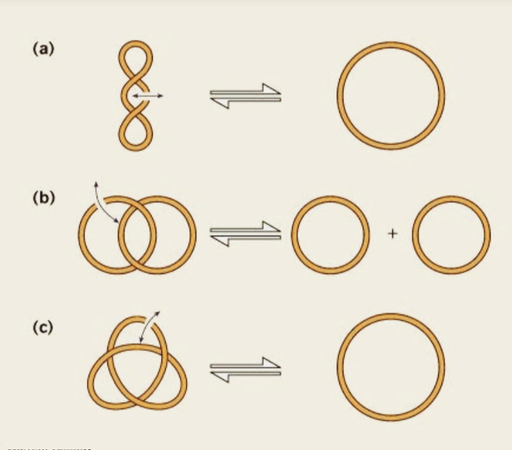 || DNA Topology|| Zooconcept. In