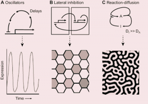 Pattern Formation ( Zooconcept. In)
