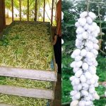 Sericulture: Introduction, Types, Life cycle,Disease and Management ( Zooconcept. In)